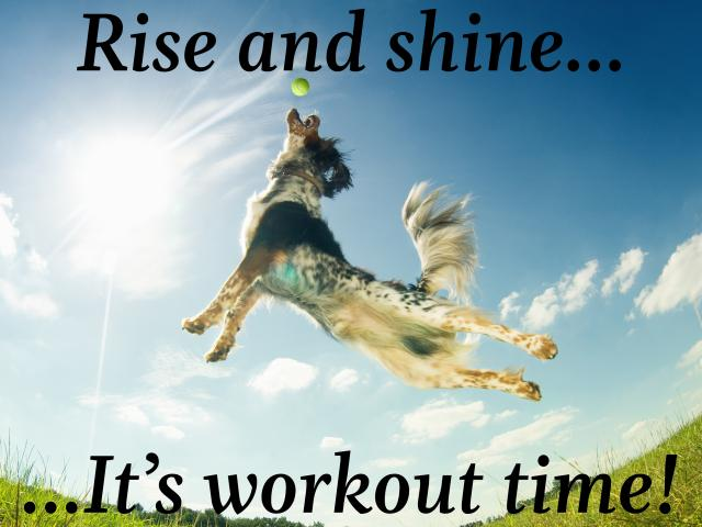 Rise-and-shine