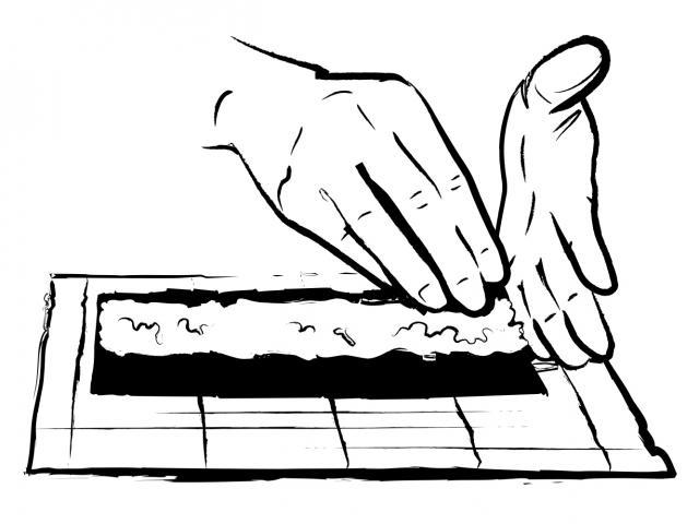 Sushi rolls 1