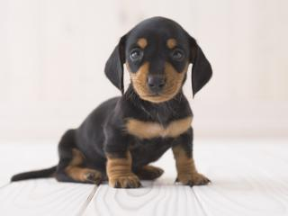 viewing cute images increases behavioral carefulness Dyer found that as the cuteness of the animals increased, so did the aggressive   viewing cute images increases behavioral carefulness.