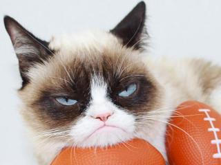 Grumpy-cat-instagram