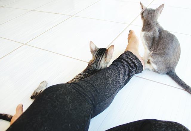 Leggings-cats