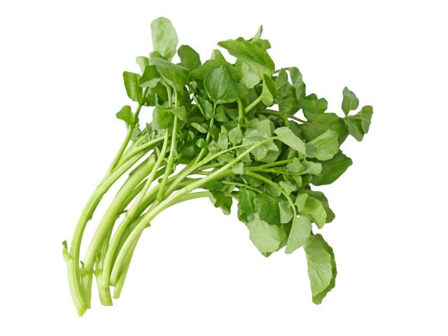 Watercress shutterstock