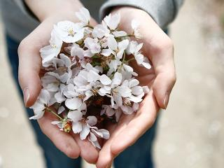 Woman holding blossom
