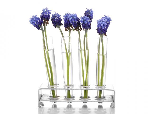 Bluebell flowers in test tubes shutterstock