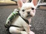 Dog-in-backpack