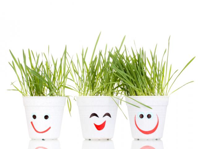 Smiling plant pots grass shutterstock